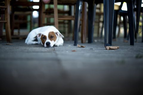 Why We Prefer If You Don't Bring Your Dog To The Restaurant